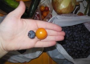 tomatoberry