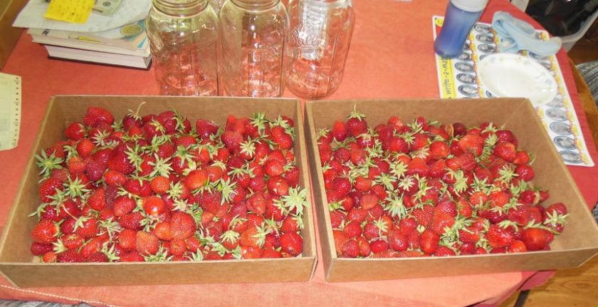 strawberries01