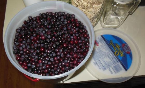huckleberries02